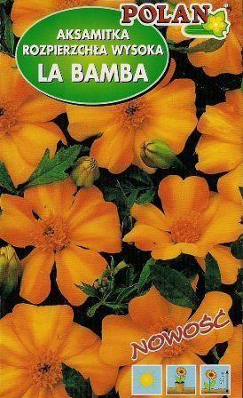 Aksamitka rozpierzchła La Bamba pomarańczowo żółta 1g Polan