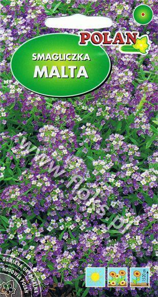 Smagliczka nadmorska Malta liliowa 1g Polan