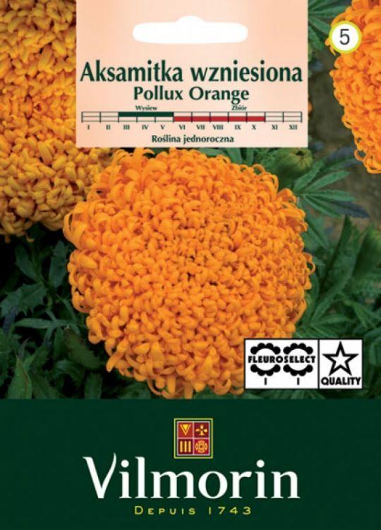 Aksamitka wzniesiona Pollux Orange 0,2g Vilmorin